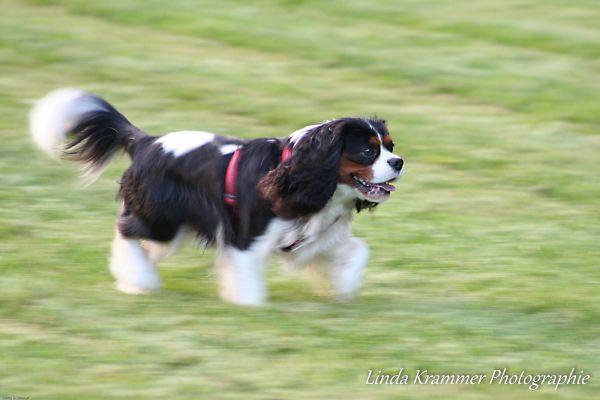 hunde-fotograf-muenchen-tegernsee-00313BCB72F-7092-8C3C-429D-67693394BE2A.jpg