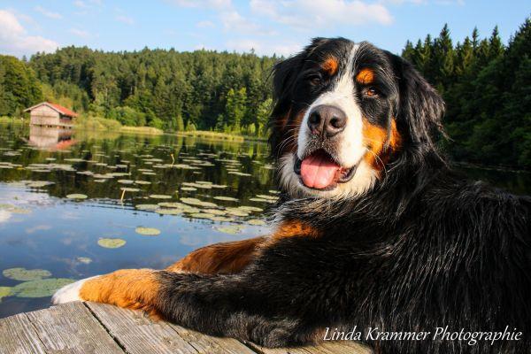 hunde-fotograf-muenchen-tegernsee-004F4DE88E8-3BF7-55A7-6B5D-DB3F875B400A.jpg