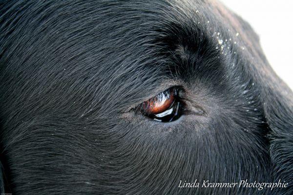 hundefotografie-muenchen-tegernsee-0054EE8337C-18EE-FC70-3065-592638A1865F.jpg