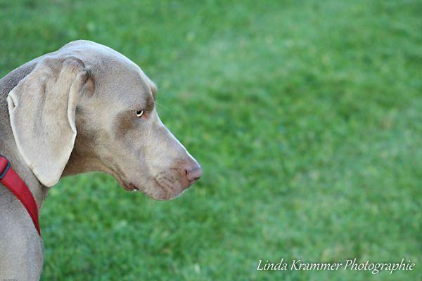 hundefotos-muenchen-tegernsee-0047175F75F-6871-56E4-20F8-C95E8F9BA898.jpg