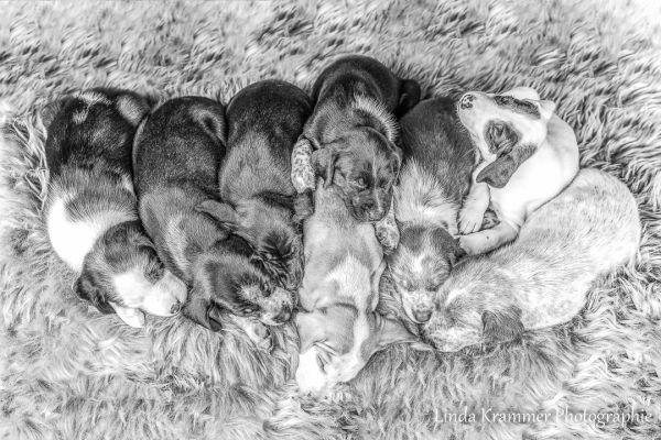 hundefotografie-10985A3DC77-17F8-587D-5F71-7C283F921C55.jpg