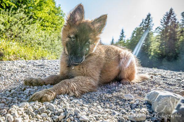hundefotografie-146FDA49029-1901-A580-29A4-7F5F9F2EC77A.jpg