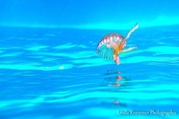 unterwasser-1525AF76AB5-72ED-23D1-0C66-BA786AE8054A.jpg